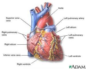 Heart attack risk medical marijuana