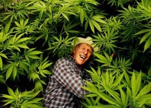 how to buy marijuana seeds in australia