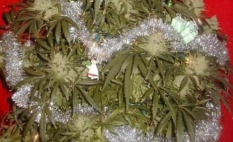 Xmas decoration on a weed plant