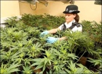 cannabis farm police